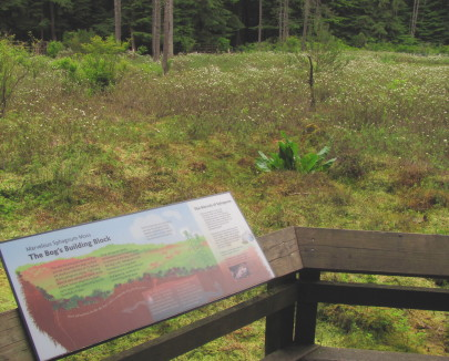 Signage around the bog provide lessons in bog history and management.